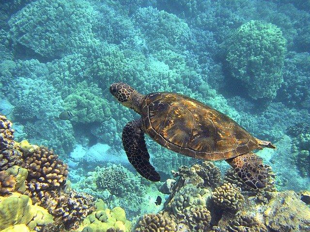 sea-turtle-547162_640